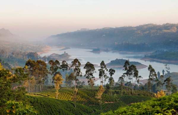 Ceylon Tea Trail